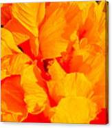 Orange Frills Canvas Print