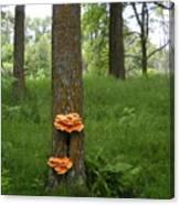 Orange Fungi On A Tree Canvas Print