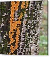 Orange Fungus Canvas Print