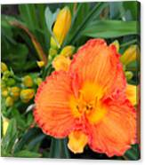 Orange Gladiola Flower And Buds Canvas Print