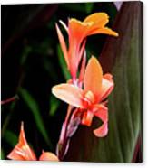 Orange Gladiolus Canvas Print