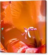Orange Gladiolus Canvas Print