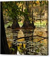 Orange Glow In The Forest Canvas Print