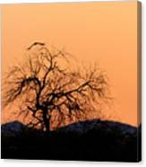 Orange Glow Sunset In The Desert Canvas Print