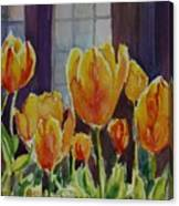 Orange Glow Tulips Canvas Print