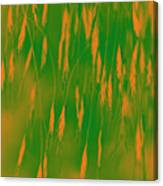 Orange Grass Spikes Canvas Print