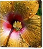 Orange Hibiscus II With Water Droplets Canvas Print
