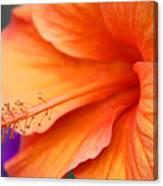 Orange Hybiscus Canvas Print