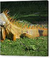 Orange Iguana Canvas Print