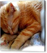 Orange Kitten Sleeping In Silk And Satin Canvas Print