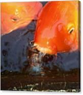 Orange Kiss Canvas Print