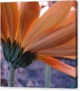 Orange Lady Canvas Print