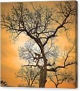 Orange Leopard Canvas Print