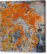 Orange Lichen Canvas Print
