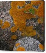 Orange Lichen On Granite Canvas Print