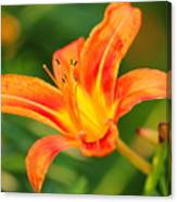 Orange Lily Canvas Print