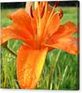 Orange Lily Dew Drop Canvas Print