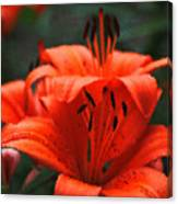 Orange Lily Digital Painting Canvas Print