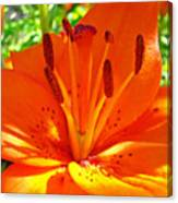 Orange Lily Flower Art Print Summer Lily Garden Baslee Troutman Canvas Print