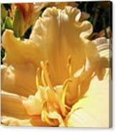 Orange Lily Flower Floral Art Prints Baslee Troutman Canvas Print