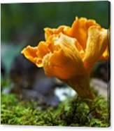 Orange Mushroom Flower On The Forest Floor Canvas Print