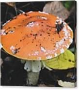 Orange Mushroom Canvas Print