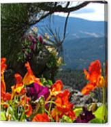Orange Nasturtium Against Mountains Canvas Print