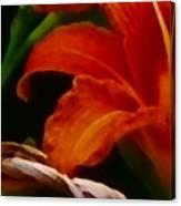 Orange Opening Canvas Print