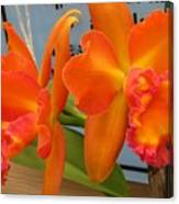 Orange Orchid Canvas Print