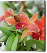 Orange Orchids 2 Canvas Print