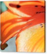 Orange Petal Dreams Canvas Print