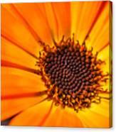 Orange Petal Canvas Print