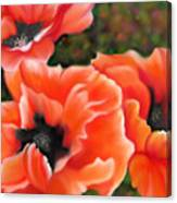 Orange Poppies Canvas Print