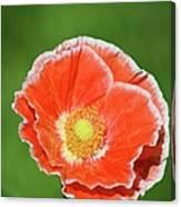 Orange Poppy 2 Canvas Print