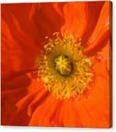 Orange Poppy Flower Canvas Print