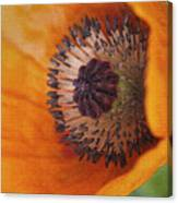 Orange Poppy With Texture Canvas Print