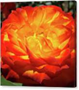 Orange Red Rose Flower Art Prints Giclee Baslee Troutman Canvas Print