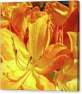 Orange Rhodies Flowers Art Rhododendron Baslee Troutman Canvas Print