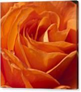 Orange Rose 2 Canvas Print