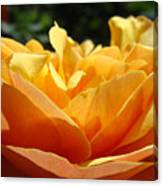 Orange Rose Art Prints Baslee Troutman Canvas Print