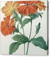 Orange Rose Campion Canvas Print