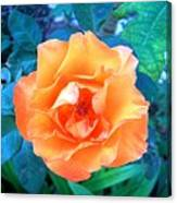 Orange Rose On Green  Canvas Print