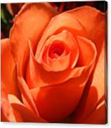 Orange Rose Photograph Canvas Print
