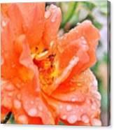 Orange Rose Raindrops Canvas Print