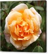 Orange Rose Square Canvas Print