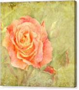 Orange Rose With Old Paint Texture Background Canvas Print