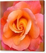 Orange Rosebud Highlight Canvas Print