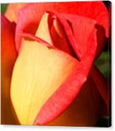 Orange Rosebud Canvas Print