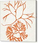 Orange Seaweed Marine Art Furcellaria Fastigiata Canvas Print