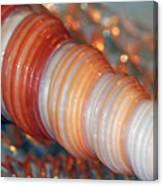 Orange Spiral Shell Canvas Print
